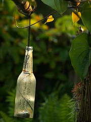I left the light on (Shelby's Trail) Tags: glass leaf backyard candle heart vine bamboo pole explore airplant