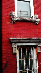 IMG_20140619 (ShellyS) Tags: nyc newyorkcity red brooklyn buildings pigeons sfx