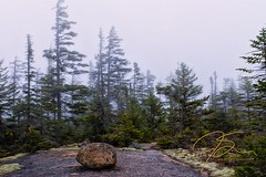 Misty Morning On Davis Path (jsinon) Tags: autumn usa fall solitude path newhampshire boulder evergreen backpacking lichen uni pathway crawfordnotch whitemountainnationalforest glacialerratic davispath forestinthemist