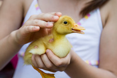 2014_06_06-EVERSUMMER-EOS 7D-3775 (-animalista-) Tags: street summer portrait baby home nature girl animal duck hand duckling