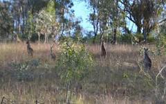 63 Anderson Road, Grattai NSW