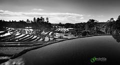 IMG_6782BW_Jatiluwih (gedelila) Tags: morning bali indonesia landscape photo stock lila gede jatiluwih subak sawang