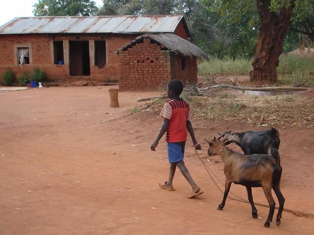 goat boy2 (1024x766)