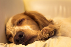 Siesta. (Dario il Cany) Tags: canon eos 600d littledoglaughedportraits flickrsfinestimages1