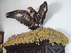 La maison-muse Salvador Dali (Portlligat, Espagne) (dalbera) Tags: salvadordali espagne portlligat catalogne cadaqus dalbera immortelles anniedalbera maisondedali