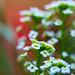 wildflower garden 2