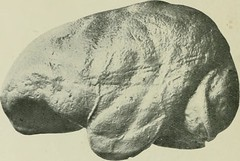 morphogenes image