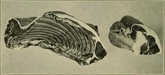Anglų lietuvių žodynas. Žodis loin of lamb reiškia ėrienos nugarinės lietuviškai.