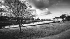 River Camel - Wadebridge (David Lea Kenney) Tags: river bridge wadebridge cornwall town landscape townscape birds tree