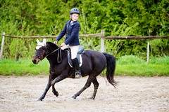 Horse Show (JustJamieLeigh) Tags: horse horses equine equines pony ponies show english riding horseback competition equestrian horsebackriding englishriding horseshow canon 60d canon60d