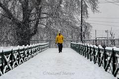 A walk in Snow (Muzamil Mattoo) Tags: kashmir snow photojournalism kashmirnow yellow leadinglines street white people life asia southeastasia india northindia himalayas pakistan