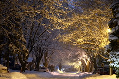 The Suburbs, with a touch of Winter (Captions by Nica... (Fieger Photography)) Tags: winter weather winterstorm serene snow snowstorm storm nature suburbs town road outdoor cold trees tree covered branches branche quebec canada pretty night nighttime