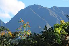 Entre-Deux : lumière matinale sur le Dimitile (philippeguillot21) Tags: fleur montagne dimitile entredeux reunion indianocean france outremer africa pixelistes canon