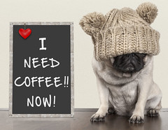 need coffee (monicaclick) Tags: adorable animal annoyed bad beige blackboard chalkboard coffee comical concept copyspace cute depressed depression design despair discontented dog droll early festive floor frustrated funny furry grumpy happy hat knitted lovely mood moody morning need paws pedigree pet pug puppy rise sign sweet text unhappy wooden