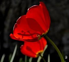 _DSC2376 -Lezard (Le To) Tags: nikond5000 extérieur fleurs fiori flowers lezard nature plante