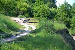 DSC_0045 (matthiasmayer410) Tags: natur landschaft schöneswetter weh spazierweg spazieren kurve grün steilküste rerik ostsee strand erholung frei entspannen drausen pflanzen