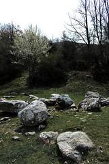 Rocks CSC_1369 (joanna papanikolaou) Tags: stones rocks forest scene scenery scape scenic landscape land travel prespes greece nature wilderness exploration trees