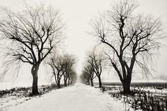 winter fog (-liyen-) Tags: winter fog cold bw blackandwhite stark fujixt1 mpt543 matchpointwinner challengeyouwinner