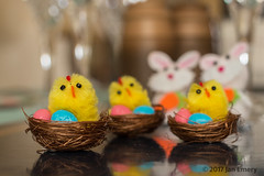 Chicken in the basket (Jamarem) Tags: easter chicks chickens rabbits baskets eggs table decorations april 2017 reflections stilllife tabletop yellow