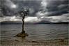 Milarrochy Oak (mtwhitelock) Tags: lochlomond tree rain milarrochybay scotland clouds weather