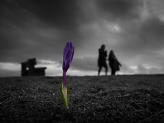 Loner (iPhilFlash) Tags: flowers crocus nature flower outdoor clouds coloursplash vancouver crocuses silhouette monochrome britishcolumbia richmond cloud outdoors canada sky garrypointpark steveston dramatic ca