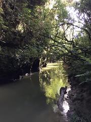 (eyair) Tags: ashmashashmash nz newzealand waitomo cave