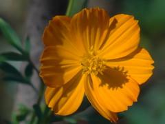 DSC00191 (familiapratta) Tags: sony dschx100v hx100v iso100 natureza flor flores nature flower flowers