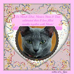 """""""On March 23rd, Marin's Mom & Dad celebrated their 8 love filled months together with Marin!"""" (martian cat) Tags: russianblue macro kitty marin kitten kittycat cat pet ©martiancatinjapan allrightsreserved© ©allrightsreserved martiancatinjapan© yokohama littlegirl girlkitten female ☺allrightsreserved allrightsreserved motivationalposter motivational captioncollection caption ☺martiancatinjapan inspirational martiancat martiancat© ©martiancat martiancatinjapan"""