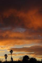 Sunset 3 19 2017 #01 (Az Skies Photography) Tags: sun set sunset dusk twilight nightfall cloud clouds sky skyline skyscape rio rico arizona az riorico rioricoaz arizonasky arizonaskyline arizonaskyscape arizonasunset red orange yellow gold golden salmon black canon eos rebel t2i canoneosrebelt2i eosrebelt2i march 19 2017 march192017 31917 3192017