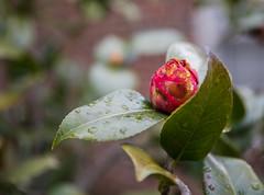 0G2A0421.jpg (JeremeAlt) Tags: photoclass leaves flowerbud annapolisharbor annapolis