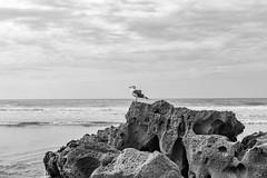 Bird Rock (Keoni Cabral) Tags: beach bird cali california ocean outdoors pacific peer reef rock sandiego sea socal southerncalifornia unitedstates us
