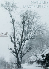 Snow Storm 2017, Uttrakhand, India (touragrapher) Tags: dharali harshil himalayas snow snowstorm2017 snowstorm uttarkhashi uttrakhand uttrakhandtourism whereeaglesdare remotestcorners thehills tourer
