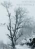 Snow Storm 2017, Uttrakhand, India (touragrapher) Tags: dharali harshil himalayas snow snowstorm2017 snowstorm uttarkhashi uttrakhand uttrakhandtourism whereeaglesdare remotestcorners thehills tourer