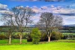 Trees bordering a wide landscape. (Fr Paul Hackett) Tags: trees landscape cloudy field farmland derbyshire
