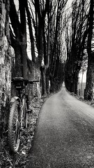 Unterwegs. (in explore) (peter353) Tags: mountainbiking mountainbike mtb fahrrad allee black white bw explore monochrom road strase trees bäume