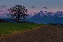 Another day ends (tom.leuzi) Tags: baum berge berneroberland canonef70200mmf4lisusm canoneos6d münsingen schnee schweiz sonnenuntergang switzerland winter branch cold cool dusk mountain mountains peaks snow sunset tree doldenhorn niesen spring frühling explored