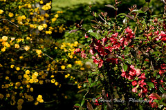 Printemps_DSC2377 (explored) (hervv30140) Tags: france paysage fleur jaune rouge rose
