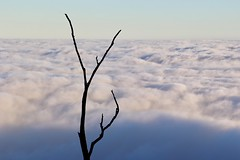 In the hills above the city (babrey-au) Tags: sky kyeema kyeematrack mtdandenong olinda kalorama clouds morning pic photo tree melbourne victoria australia canon stick white mountain cloud fog foggy