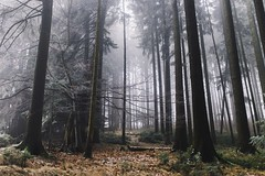 pause for a moment (desomnis) Tags: forest woodland woods nature trees landscapephotography landscape landscapes fog foggy haze mühlviertel austria österreich upperaustria oberösterreich sigma35mmf14art sigma35mm canon6d