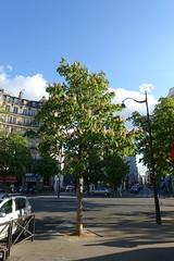 Spring @ Paris (*_*) Tags: paris france europe city 2017 april 75015 paris15 spring