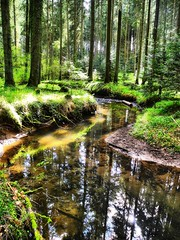 Naturschutzgebiet Eisenbach (almresi1) Tags: river bach flus wald forest wood spiegelung mirroring