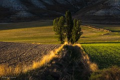 Árboles en los campos (allabar8769) Tags: camposdecastilla paisaje sanmartídevalbení valladolid atardecer árboles