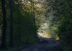 Some shiny future... (Jan R. Ubels) Tags: em1 olympus olympusem1 netherlands nederland drenthe tynaarlo vries zonlicht sunlight shine morning sunrise zonsopkomst ochtend zandweg dirtroad road weg