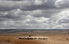 20070927-124900.jpg (A golpe de zapatilla) Tags: oficios paisaje rural campos ganadería cielo pedrazadecampos palencia españa