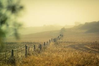foggy fence