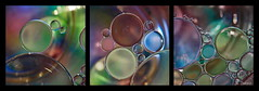 2017-04 - huile et eau 1 (g_dubois_fr) Tags: macro macrophtographie huile eau macrophotography oil water bulles gouttes drop bubbles couleurs colors