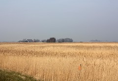 Wide Horizons (YIP2) Tags: polder holland dutchlandscape nature spring uitdam amsterdam horizon