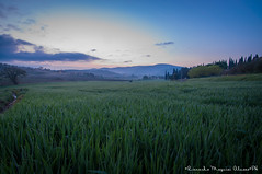 My land at the dawn of the morning (rick_magal) Tags: sunset sky italy sun green nature landscape cool nikon country wideangle land fels umbria d90