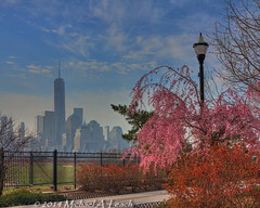 Spring Walk Blossoms and NYC Skyline (mik_leach) Tags: new york city nyc ny tower lamp skyline river freedom spring waterfront view manhattan district blossoms nj sidewalk lamppost walkway newport jersey wtc hudson lower financial hdr pavonia 1wtc