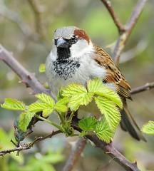Back to birds (J*A*L) Tags: nikond3 nikkor300mmafedf4